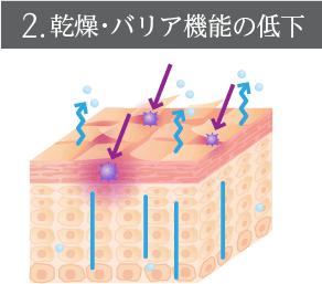 2.乾燥・バリア機能の低下